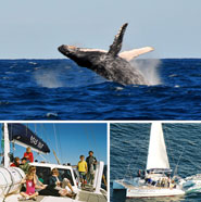 Albany Whale Tours