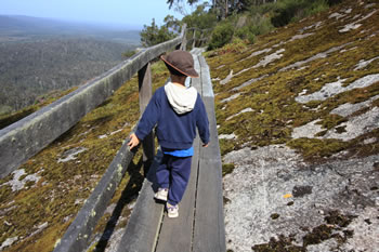 Rockwood Trail at Mt Frankland