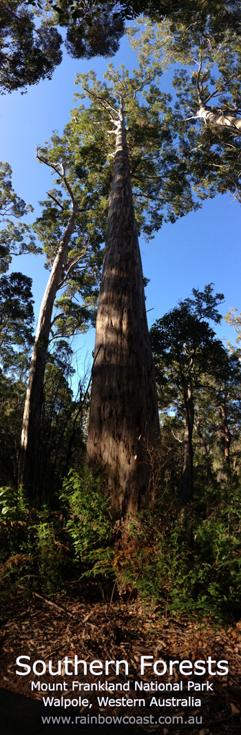 Southern Forests, Mount Frankland National Park, Walpole, Western Australia