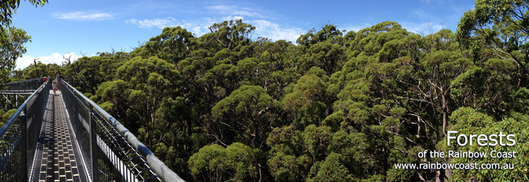 Forests along the South Coast of Western Australia
