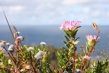 Wildflowers in West Cape Howe National Park