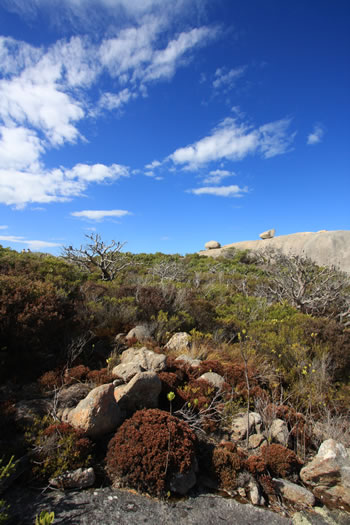Stony Hill, Torndirrup NP, Albany