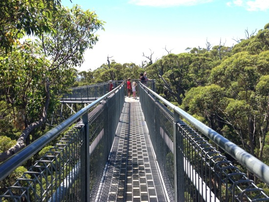 Valley of the Giants Treetop Walk Walpole