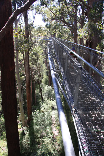 Architecturally Designed Treetop Walkway
