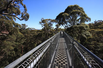 Valley of the Giants Treetop Walkway