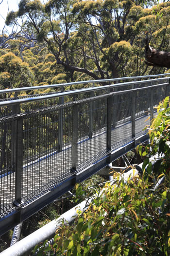 The steel walkway of the Valley of the Giants