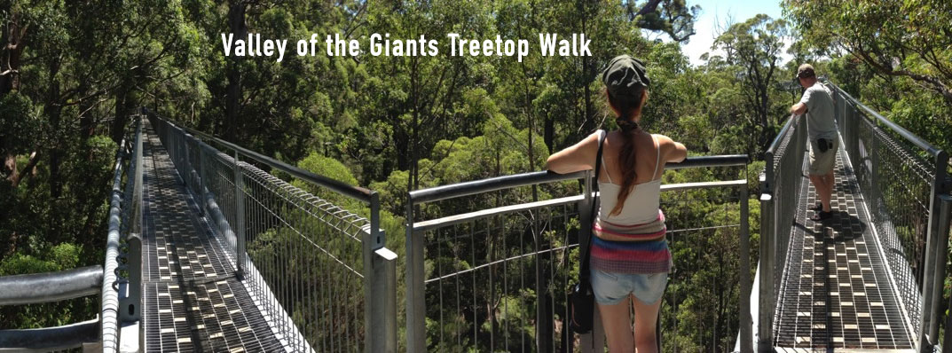 Valley of the Giants Treetop Walkway Panoramic Photo, Walpole Wilderness Area