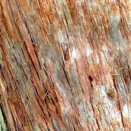 Tree Bark, Valley of the Giants
