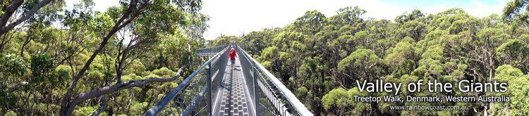 Valley of the Giants Treetop Walkway, Walpole Wilderness Area